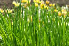 Free Green Grass Stock Images - 5256714