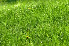 Free Green Grass 4 Royalty Free Stock Photo - 5256945