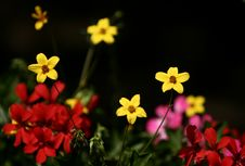 Free Wild Flower Stock Photo - 5257200