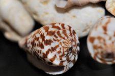 Free Shells And Rocks Decor Royalty Free Stock Image - 5257346