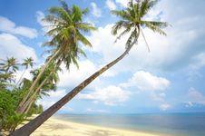 Free Tropic Shore Stock Photography - 5257582