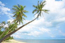 Free Tropic Shore Royalty Free Stock Images - 5257809