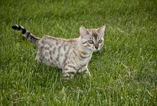 Free Cat Prowling In The Grass Stock Images - 5257914