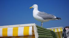 Free Seagull Stock Photography - 5258362