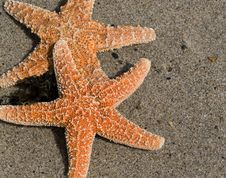 Free Two Red Starfish On Sand Stock Image - 5258401