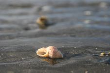 Free Shell Stock Photography - 5258512