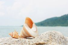 Free Seashell On The Rock Stock Images - 5258654