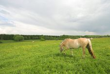 Free Horses On Field Royalty Free Stock Image - 5259126