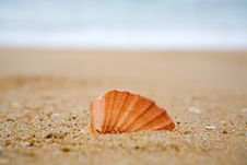 Free Cockleshell In Sand Stock Photos - 5259273