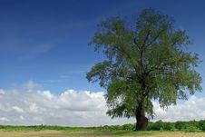 Free Lonely Tree Royalty Free Stock Photos - 5259898