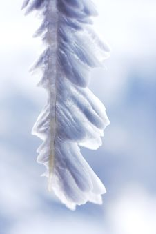 Free Feathery Icicles  5 Stock Images - 5259974