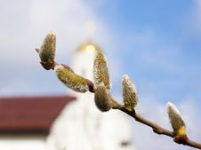Free Willow Branch With Five Burgeons And Church Stock Photos - 52520863