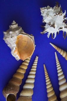 Free Marine Sea Shells Copy Space Stock Photography - 52577442