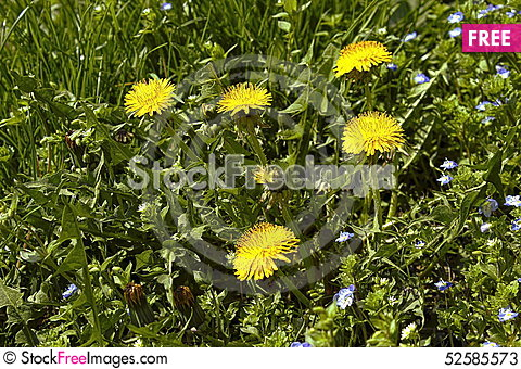 Free Green Grass Stock Photos - 52585573