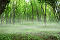 Free Mist In Green Forest Stock Photos - 5267723