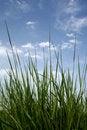 Free Green Fresh Grass Stock Photos - 5268033
