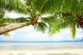 Free Tropic Shadow Royalty Free Stock Image - 5269736