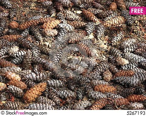 Free Pine Cones Stock Photos - 5267193