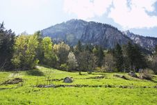 Free Meadow With Rocks And Alpine Trees Royalty Free Stock Images - 5260299