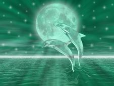 Free Dolphins Stock Photos - 5260523