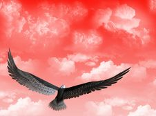 Free Eagle In The Sky Stock Photography - 5260532