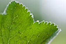 Free Macro Of Drop On Leaf Royalty Free Stock Photography - 5264017
