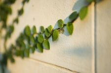 Free Green On Wall Royalty Free Stock Photos - 5264088