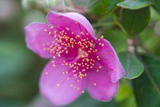 Free Rosebush Bloom Stock Images - 5264114