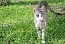 Free Young Cat Stock Images - 5264264