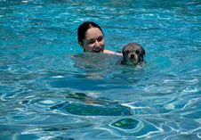 Free Girl And Dog Swimming In Pool Stock Photography - 5265842