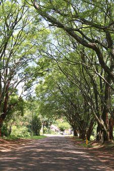 Free Trees Stock Photos - 5265873