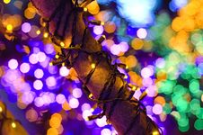 Free Christmas Lights On Tree. Stock Images - 5266224