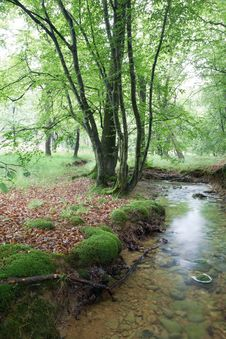 Free Stream In The Woods Stock Photo - 5266690