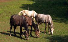 Free Horses Royalty Free Stock Image - 5267456
