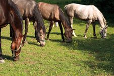 Free Horses Stock Photos - 5267483