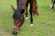 Free Horses Stock Photos - 5267503