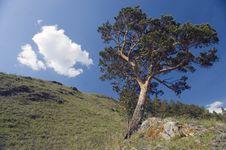 Free Blue Sky And Green Tree. Royalty Free Stock Photo - 5267525