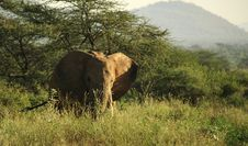 Free Elephant In The Grass Royalty Free Stock Images - 5267739