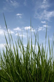 Free Green Fresh Grass Stock Photos - 5268033