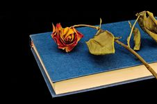 Dried-out Rose On Book  And Bookstand Stock Photography