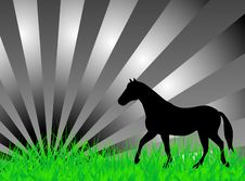 Free Horse On The Grass Royalty Free Stock Photos - 5268248