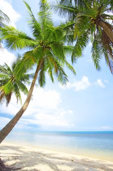Free Tropic Shore Stock Image - 5269211