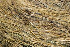 Free Hay Texture Royalty Free Stock Images - 5269369