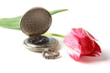 Free Watch And Tulip Stock Images - 5269954