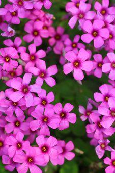Free Flowerws Stock Image - 5269991