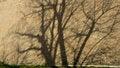 Free Shadow Tree On The Brick Wall Stock Photo - 52639650
