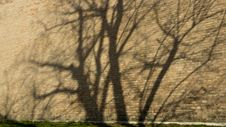 Shadow Tree On The Brick Wall Stock Photo