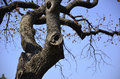 Free Hackberry Tree Branches Stock Photography - 52693842