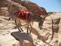 Free Petra, Jordan Royalty Free Stock Images - 5271199