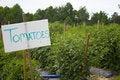 Free Tomato Sign Stock Photos - 5272063